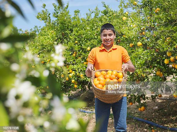 boy showing basket full of oranges - orange farm stock photos and pictures