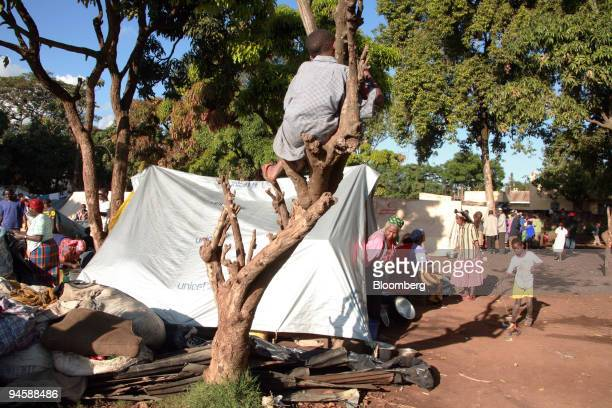 A boy sits in a tree at the Huruma refugee camp in Nairobi Kenya on Monday Jan 21 2008 More than 1000 people have sought refuge at the camp due to...