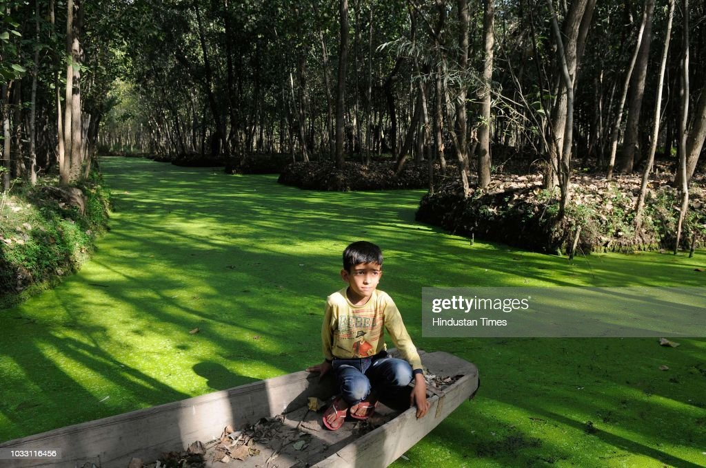A boy sits on a boat on sunny day in the interiors of Dal Lake, on September 14, 2018 in Srinagar, India.