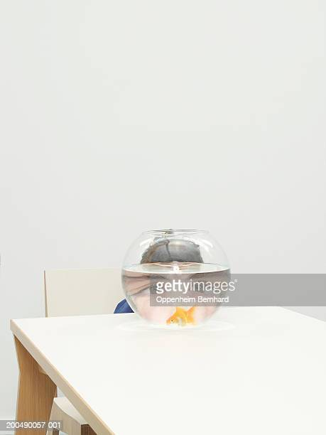 Boy (7-9) sitting at table looking at fan-tail goldfish in bowl