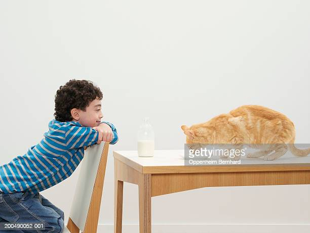 Boy (7-9) sitting at table, watching cat drink from saucer, side view