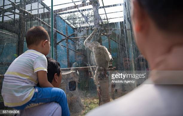 A boy sitting on his father's shoulders looks at an animal at the Beijing zoo during the International Children's Day on June 1 2016 in Beijing China...
