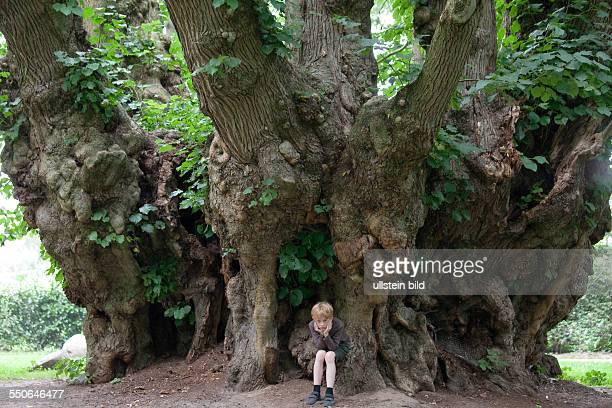 A boy sitting under a great and old lime tree in Heede Lower Saxony Germany