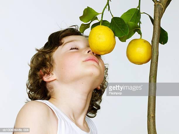 Boy (6-7) smelling lemons, eyes closed, close-up