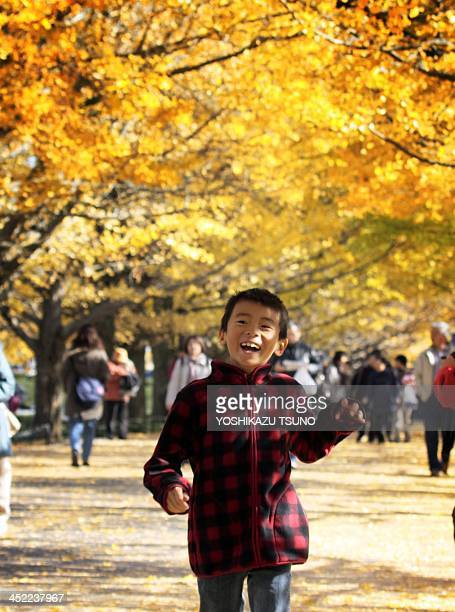 A boy smiles under yellow ginkgo trees at the Showa Kinen park in Tokyo on November 26 2011 Local residents came out to admire some 200 ginkgo trees...