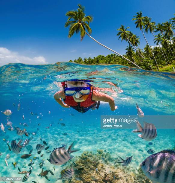 boy snorkeling near the coral reef. vacation at sea - seychelles photos et images de collection