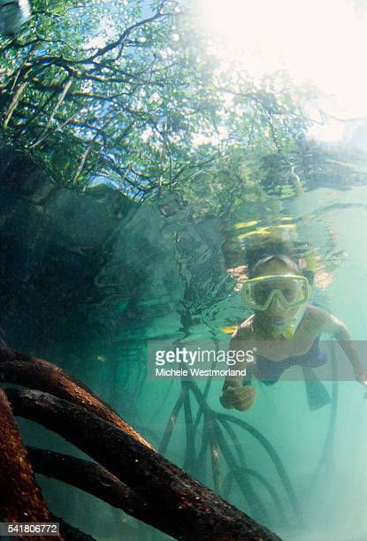 Boy Snorkeling Through Mangrove Roots