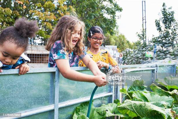 boy squirting hose in community garden - farm stock pictures, royalty-free photos & images