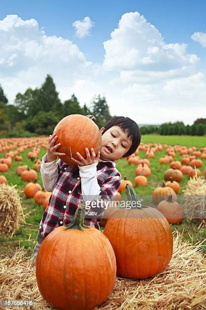 boy stacking pumpkins - pumpkin patch stock photos and pictures