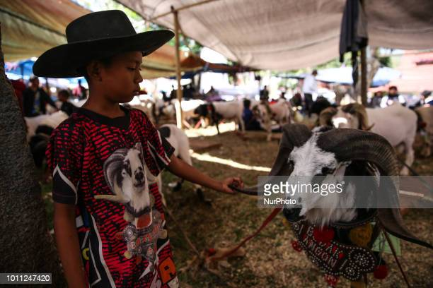 A boy stand next to the a ram during a Sundanese traditional cultural event called Adu Domba Garut at Rancabango village in Garut West Java Indonesia...