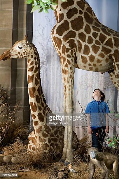 Boy standing beneath a giraffe