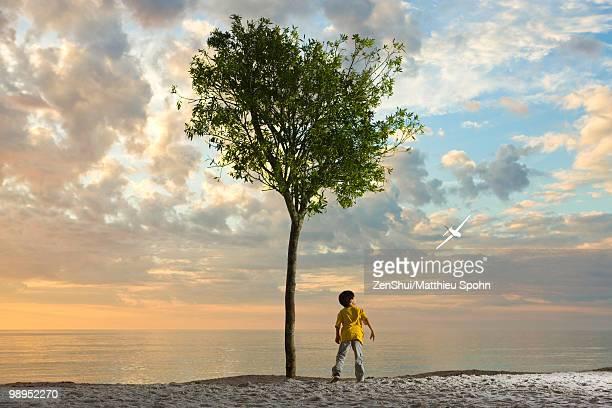 Boy standing beneath tree on beach watching plane soaring through the air