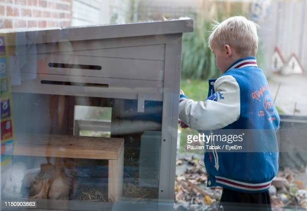 boy standing by built structure with rabbits - paulien tabak stock pictures, royalty-free photos & images