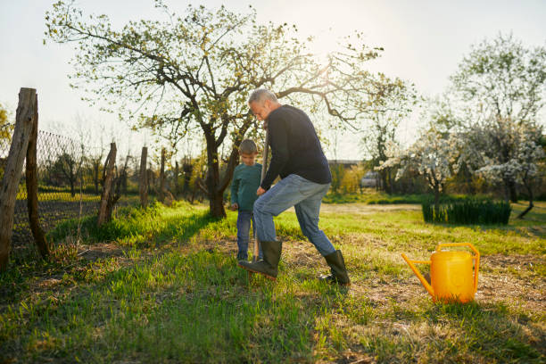 Boy standing by grandfather digging with shovel while gardening