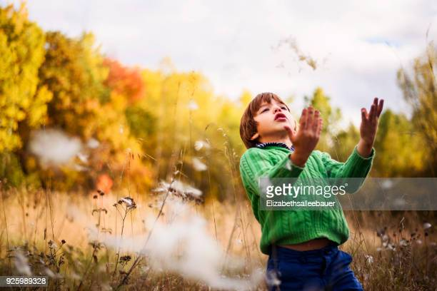 boy standing in a field throwing milkweed flowers in the air - milkweed stock pictures, royalty-free photos & images