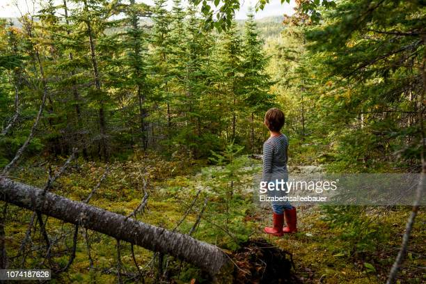 boy standing in a forest in summer, lake superior provincial park, united states - lake superior provincial park stock pictures, royalty-free photos & images