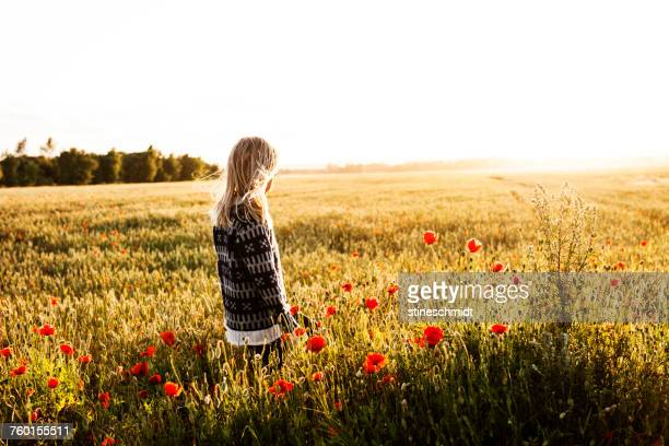 boy standing in a poppy field, denmark - innocence stock pictures, royalty-free photos & images