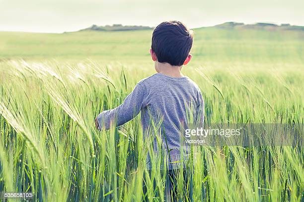 boy (18-23 months) standing in field - 18 23 months stock pictures, royalty-free photos & images