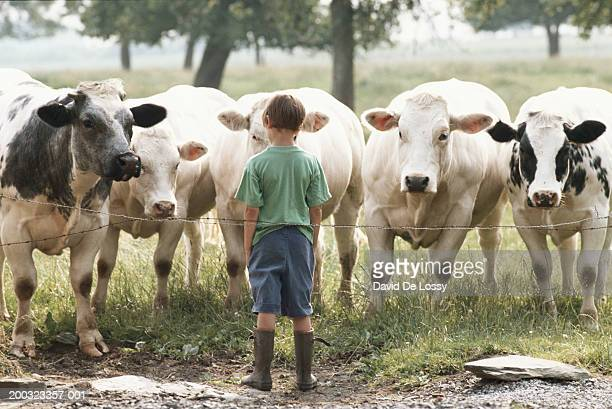 Boy (6-9) standing in front of cows, rear view
