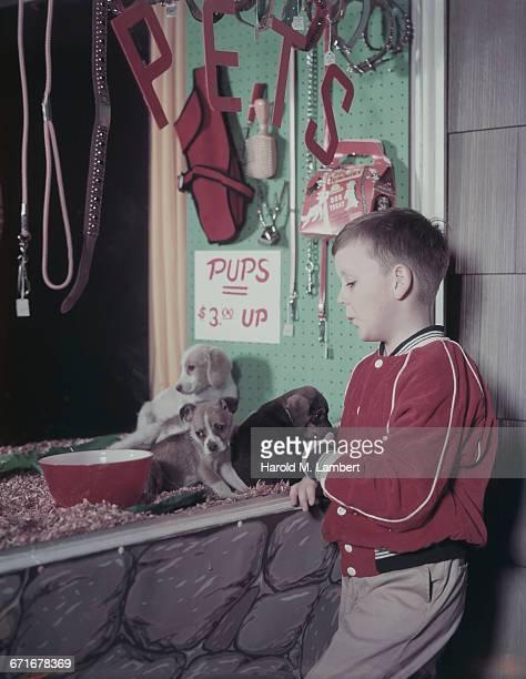 boy standing in pet shop  - escrita ocidental - fotografias e filmes do acervo