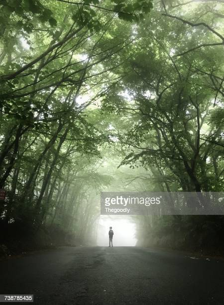 Boy standing on a foggy treelined road, Sidmouth Forest, Devon, England, UK
