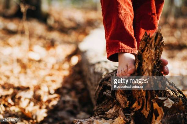 Boy standing on a log in the forest
