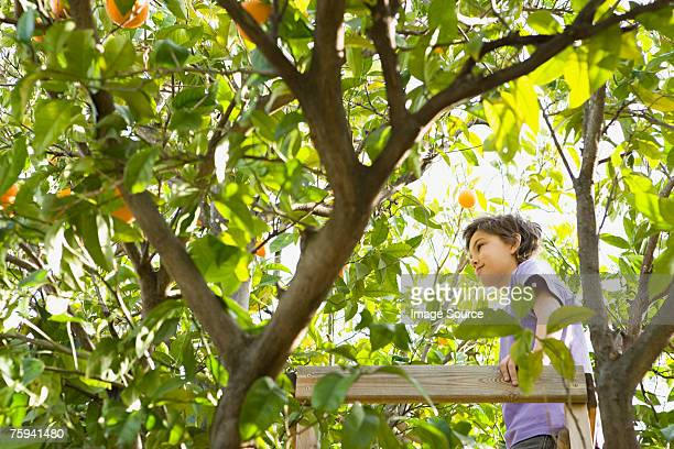 Boy standing on a tree house