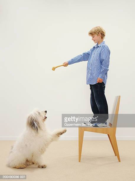 Boy (8-10) standing on chair holding dog chew, dog raising paw