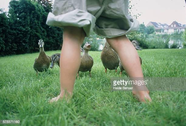 Boy standing on meadow looking at ducks