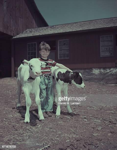 boy standing with calf  - vertebrato foto e immagini stock