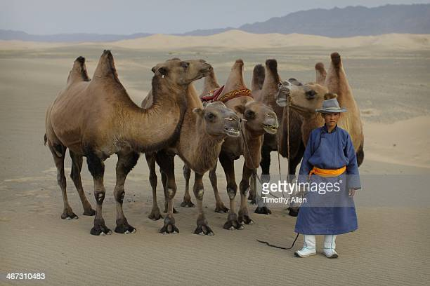 boy stands with camels in mongolian gobi desert - omnogov stock pictures, royalty-free photos & images