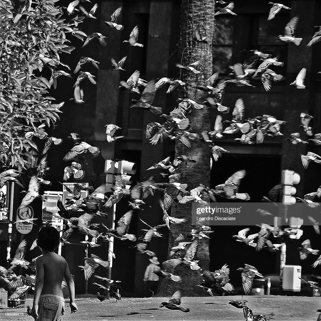 CONTENT] A boy stays near a multitude of pigeons in a plaza in Buenos Aires.