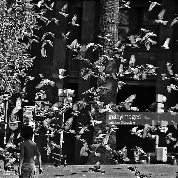 CONTENT] A boy stays near a multitude of pigeons in a plaza in Buenos Aires