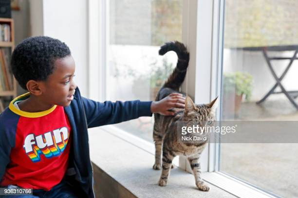 boy (4-5) stroking cat - stroking stock pictures, royalty-free photos & images