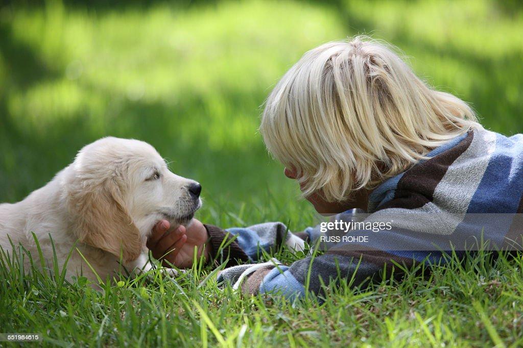 Boy stroking Golden Retriever puppy on grass : Stock Photo