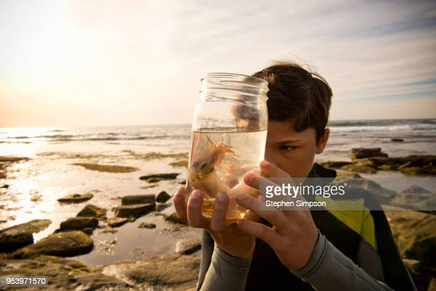 boy studies octopus in jar at tide pools - exploration stock pictures, royalty-free photos & images