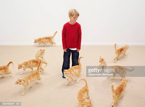 Boy (8-10) surrounded by cats (Digital Composite)