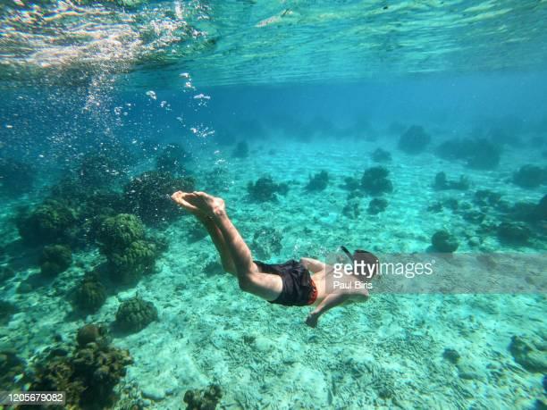 boy swims under the surface in cristal blue water in the coast off to playa larga, bay of pigs, cuba - base equipamento desportivo imagens e fotografias de stock