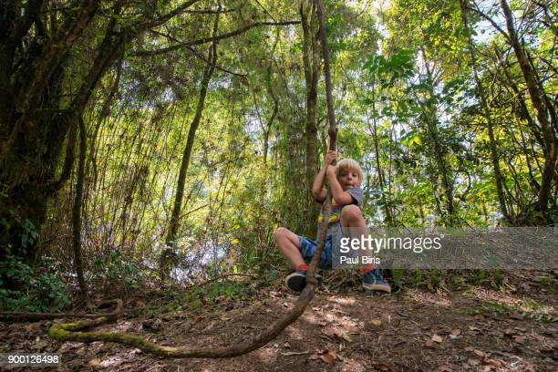 Boy swinging on tree vine, exploring the Mossy Forest, Brinchang, Cameron Highlands