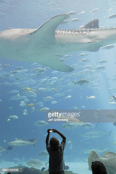 A boy taking a photo of a whale shark in the world's largest tank at Georgia Aquarium