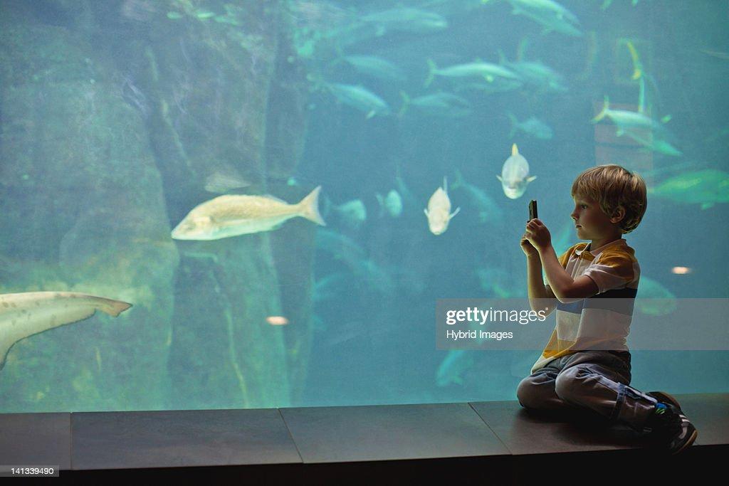 Boy taking pictures of fish in aquarium : Stock Photo