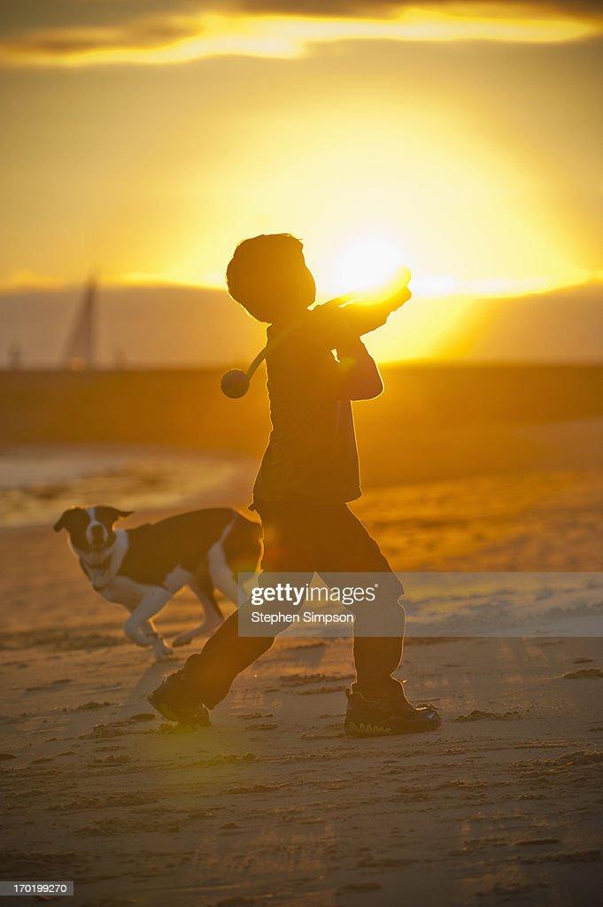 boy throwing tennis ball on the beach for his do : Stock Photo