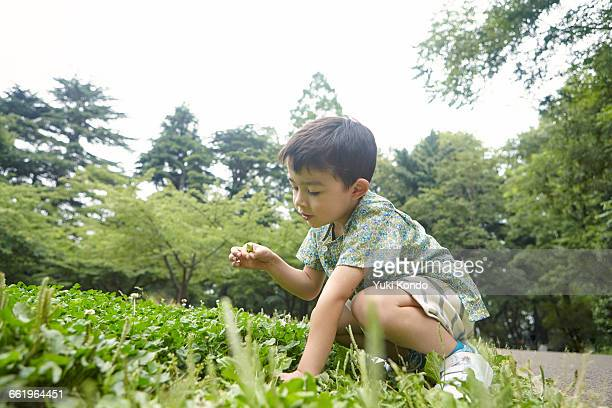Boy to look for four-leaf clover.