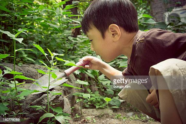 boy touching bug with trowel - sungjin kim stock pictures, royalty-free photos & images