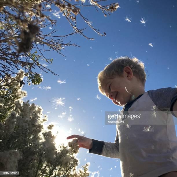 Boy touching flowers blowing away, Orange County, California, America, USA