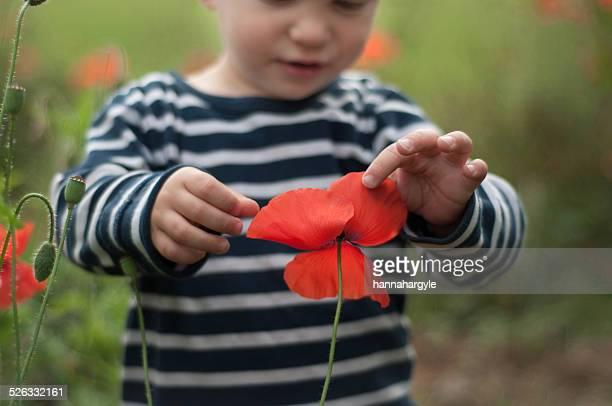 Boy touching poppy flower