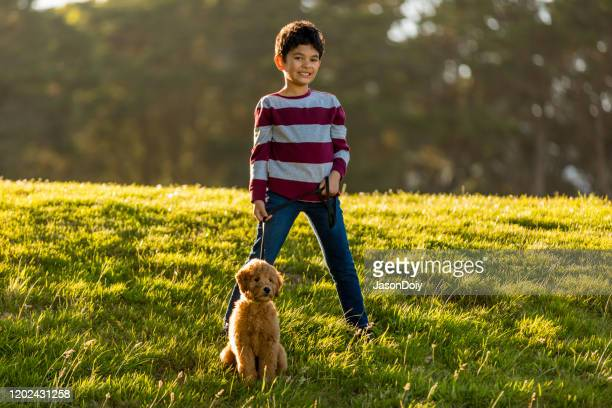 boy training goldendoodle im park - goldendoodle stock-fotos und bilder