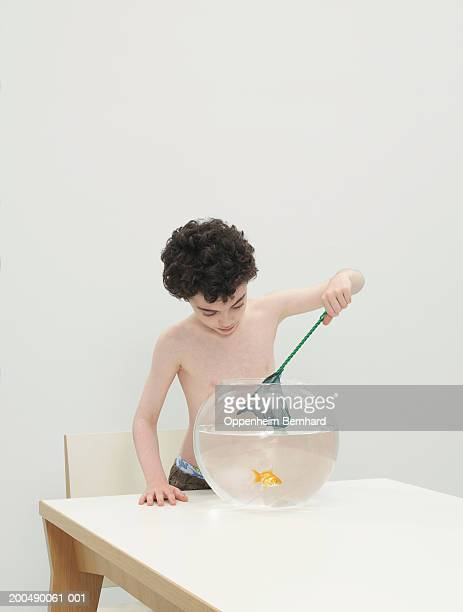 Boy (7-9) using net to catch fan-tail goldfish in bowl