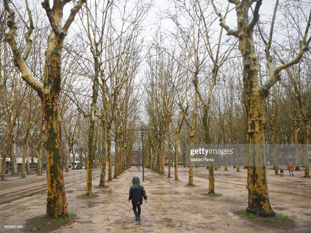 Boy Walking Alone At Forest Stock Photo Getty Images