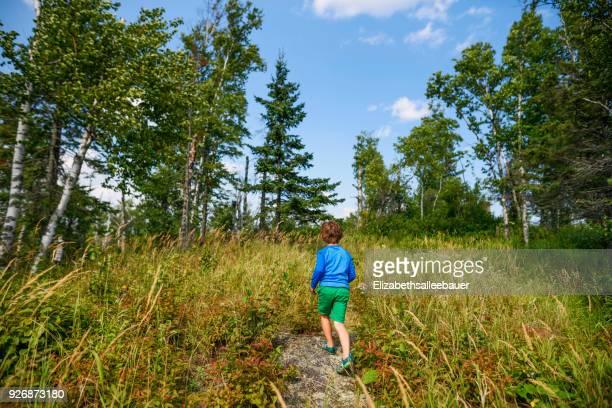 boy walking along a forest trail - solo un bambino maschio foto e immagini stock